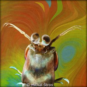 Colorful mantis shrimp by Michal Štros