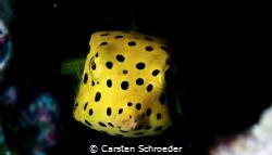 Yellow cubicus Nikon D200 by Carsten Schroeder
