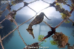 diving down by Gaetano Gargiulo