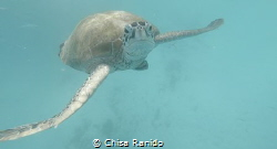 Swimming with the Sea Turtles at Redang Island, Terenggan... by Chisa Ranido