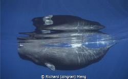 Whale Reflection by Richard (qingran) Meng
