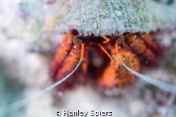 Hermit crab Bokeh by Henley Spiers
