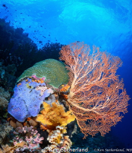 Colours of the reef An unusual angle of a healthy reef i... by Ken Sutherland