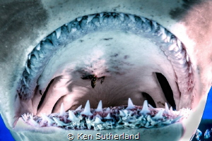Hammeread Throat