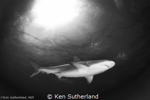 Shark in Snell's window Reef shark shot at Tiger Beach. by Ken Sutherland