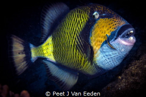The Coral Cruncher