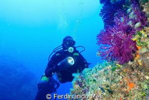 Marettimo's Island (Blutek Diving) by Ferdinando Meli