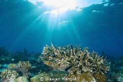 Healthy Coral Reef north of Raja Ampat, Indonesia by Wawan Mangile