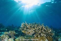 Healthy Coral Reef north of Raja Ampat, Indonesia by Wawan Mangile