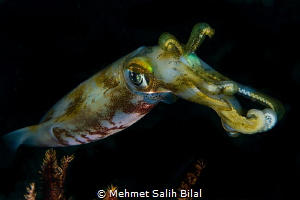 The squid. by Mehmet Salih Bilal