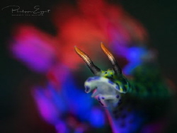 Nudi Travolta