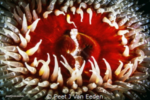 The Gatekeepers of Gullies