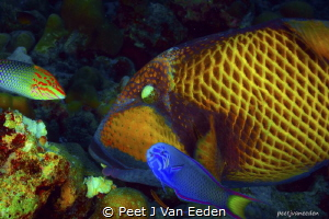 The Coral Cruncher and Guests Mutual Interest- Food by Peet J Van Eeden