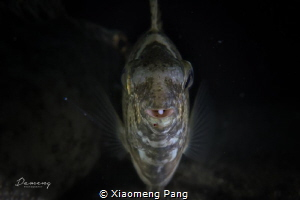 Face to face. by Xiaomeng Pang