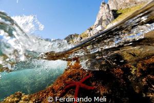 Underwater's star by Ferdinando Meli