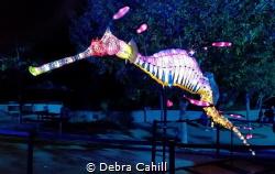 TARONGA ZOO LIGHT SCULPTURE OF A WEEDY SEA DRAGON VIVID S... by Debra Cahill