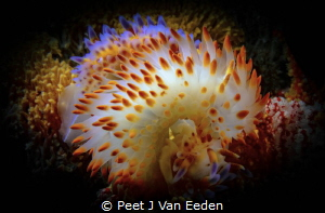 It takes two to tango