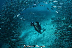 Big Schooling by Wawan Mangile