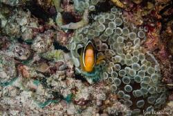 Hello friendly Nemo by Igor Tarasevich