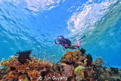 heavenly water , dive in alor indonesia, the crystal clea... by Jun Ouyang