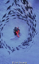it was a magic moment, when a group of fish surrounding m... by Jun Ouyang
