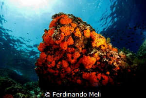 Underwater colors by Ferdinando Meli