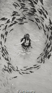 it was a magic moment when a group of fish surrounding my... by Jun Ouyang