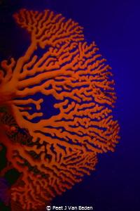 The Deep Blue Sea by Peet J Van Eeden