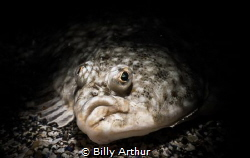 Plaice portrait.