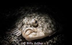 Plaice portrait.  Taken with a Sony rx100mkii in Nautica... by Billy Arthur