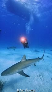 nurse shark in bahamas by Jun Ouyang