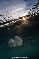 Dappled Jelly by Henley Spiers
