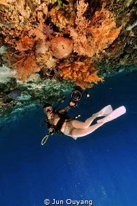 coral and diver by Jun Ouyang