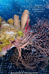 """Seltzer Reef"" - Divers' bubbles stream past colorful spo... by Susannah H. Snowden-Smith"