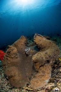 giant tridacne in Raja Ampat by Raffaele Livornese