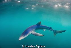 Blue Shark Invasion by Henley Spiers