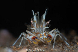 Tiger shrimp: I'm watching you!! by Jiayun Chen