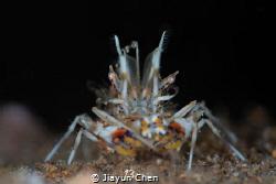 Tiger shrimp: I'm watching you!! by Jiayun Chen