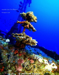 Stella Maru shipwreck on portside at 28 metres by Jean-Yves Bignoux