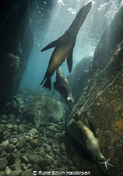 Playful sea lions from Los Islotes. by Rune Edvin Haldorsen