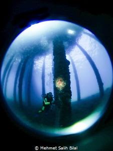 An Underwater photographer under the pier. by Mehmet Salih Bilal