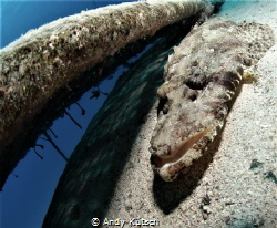 Crocodilefish in the red sea by Andy Kutsch