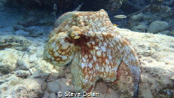 """Hiding in plain sight"". While snorkeling in the Bahamas,... by Steve Dolan"