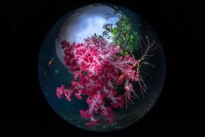 Soft coral on mangrove root by Wayne Jones