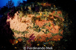 Coral and sponge at Marettimo's Island by Ferdinando Meli
