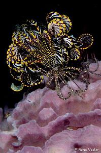 Ocean Art in Anilao by Norm Vexler
