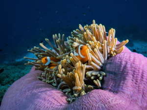 "house off colors ""Tubbataha Reefs"" by Marc Van Den Broeck"
