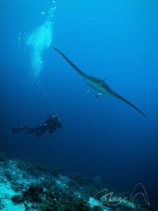 "stelth ""Tubbataha Reefs"" by Marc Van Den Broeck"