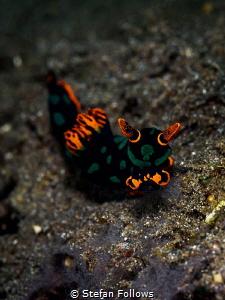 Creep  Nudibranch - Nembrotha kubaryana  Padagbai, Ba... by Stefan Follows