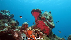 For the love of the sea. This heart shaped coral in Washi... by Sandy Ireton